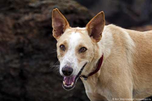 хозяин показал псу фото джулии робертс реакция собаки вас рассмешит