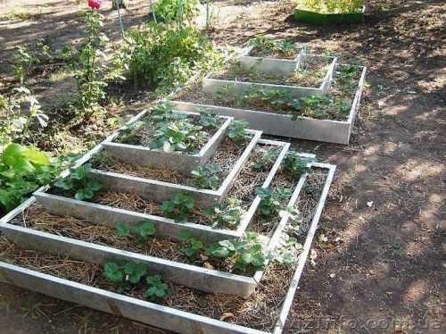 выращивание моркови как бизнес в домашних условиях: уход и технология выращивания моркови