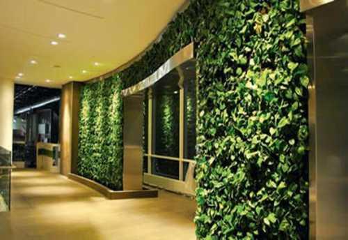 вертикальное озеленение на даче, в загородном доме и квартире