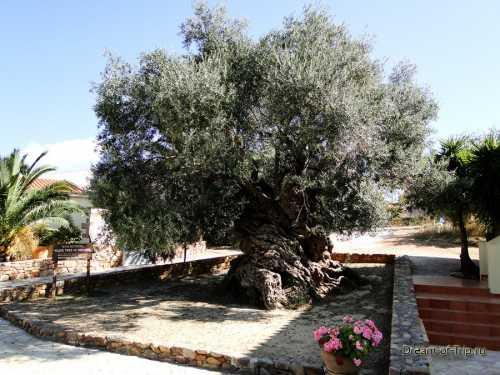 оливковое масло: 10 альтернативных способов применения